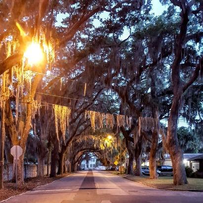 Magnolia Ave South